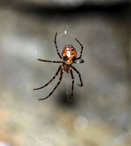 Animal Themes Animals In The Wild Close-up Day EyeEm Best Shots EyeEm Nature Lover Focus On Foreground Insect Insects  Macro Macro Photography Makro Nature Nature Nature Photography Nature_collection No People One Animal Outdoors Skull Spider Spider Web Spiders Spidersweb Web