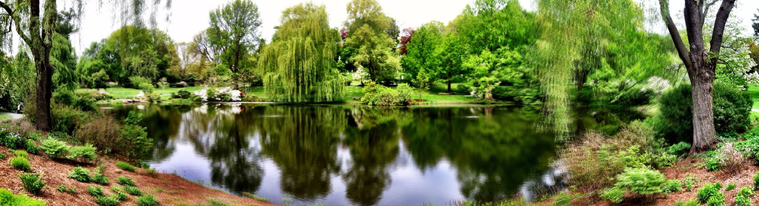 tree, water, reflection, tranquility, tranquil scene, scenics, beauty in nature, lake, nature, growth, forest, idyllic, green color, standing water, plant, day, non-urban scene, calm, river, no people