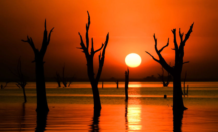 Silhouette bare tree by lake against orange sky