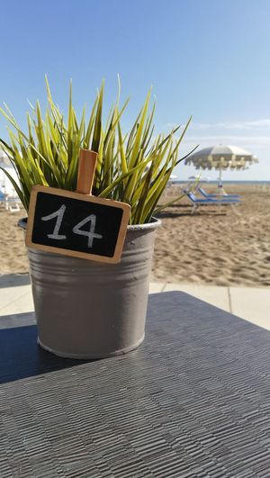 14 Number No People Green Color Sea Beach Sand Close-up Plant Sky Potted Plant