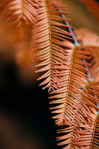 Close-up of leaves against blurred background