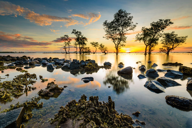Line of Tree Anyer  INDONESIA Pantai Anyer Serang Beach Beauty In Nature Cilegon Cloud - Sky Day Horizon Over Water Nature No People Outdoors Reflection Rock - Object Scenics Sea Sky Sunset Tranquil Scene Tranquility Tree Water First Eyeem Photo