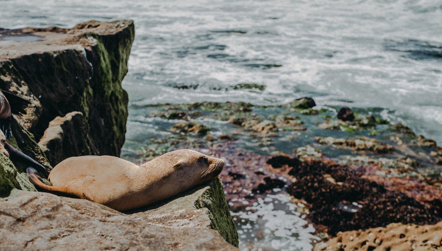 Animals In The Wild Baby Oceanside San Diego Sea Lion Pup Sealife Summer Exploratorium Wildlife & Nature Wildlife Photography Adventure Animal Photography Animal Sleeping Animals Marine Marine Life Ocean Sea Seal Sealion  Sealions Seascape Sunbathing Wild Wilderness Wildlife