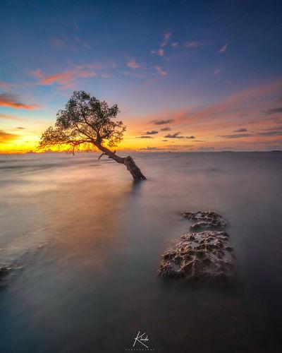 LONELY TREE Tree Sunset Backgrounds Water Beauty Sea Reflection Sky Landscape Horizon Over Water Single Tree Sun Growing Sunrise Ocean Calm Shining Romantic Sky Sunbeam Tranquil Scene Silhouette Blooming