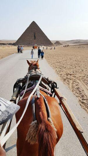 Rear view of horse on desert against sky