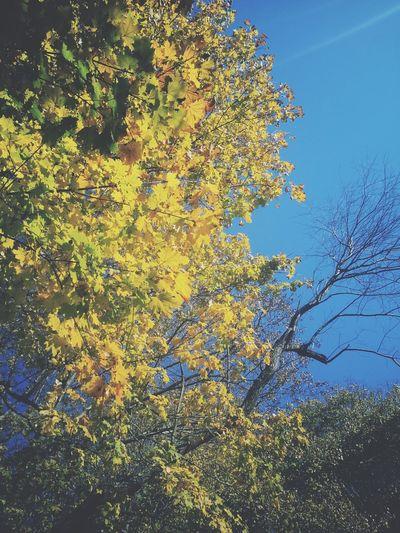 I Love fall :)
