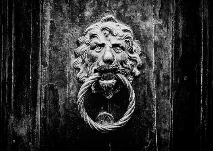Close-up of an antique metal doorknob with a lion face on a wooden door - Concept for antique, gothic, mistery Ancient Antique Architecture Bronze Classic Entrance Gothic Home Lion Close-up Desing Door Door Knocker Doorknob Handle House Knob Knocker Metal Metallic Old Symbol Vintage Women Wooden