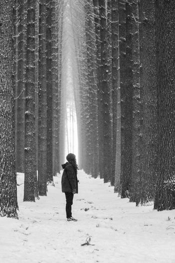 Sugar pine Forrest. Monochrome Photography Snow Winter Theshootproject Australia Tranquil Scene Tranquility Walking Lifestyles WoodLand Nature Beauty In Nature Enjoy The New Normal Nature Remote Hike Sugar Pine Forest Forestwalk Forest Photography People And Places Adventure People Of EyeEm Finding New Frontiers Neighborhood Map The Portraitist
