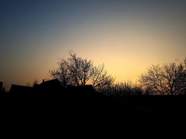 Sun Sunset Sunset In Tree Naplemente Nap