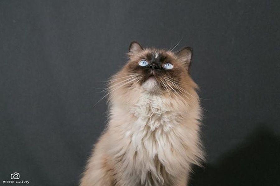 Animal Themes Cat Cat Photo Cat Photography Cat Portrait Cat Pose Chat No People