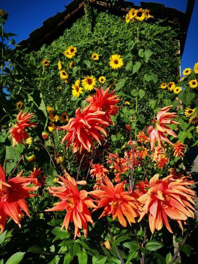 Close-up of flowering plants in garden