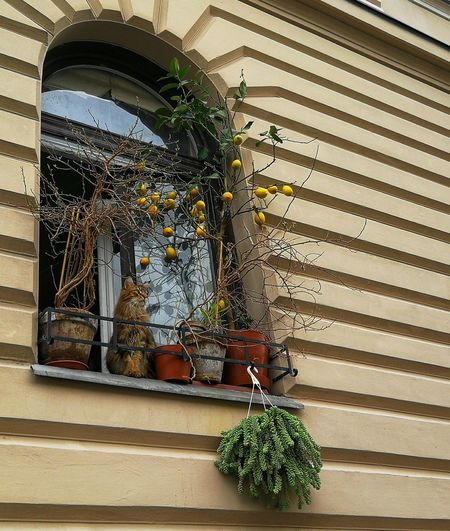 Low angle view of potted plants on window of building