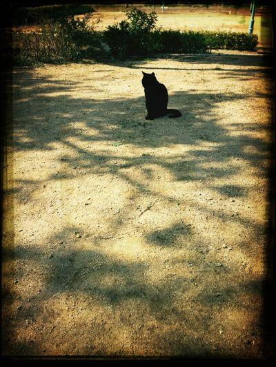 黒猫と日向ぼっこ
