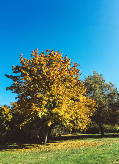 Autumn vibes Autumn Beauty In Nature Budapest Clear Sky Day Fall Fall Beauty Fall Colors Fragility Freshness Growth Nature No People Outdoors Sky Tree