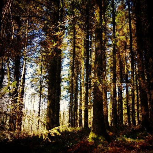 """Through The Trees"" Westlandpound Devon Treesofinstagram Trees WoodLand Spring Springtime Sundaywalk Shotoftheday"