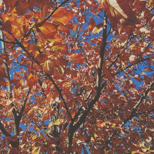 Autumn Leaf Fall Colors Fall Nature Tree Beauty In Nature No People First Eyeem Photo