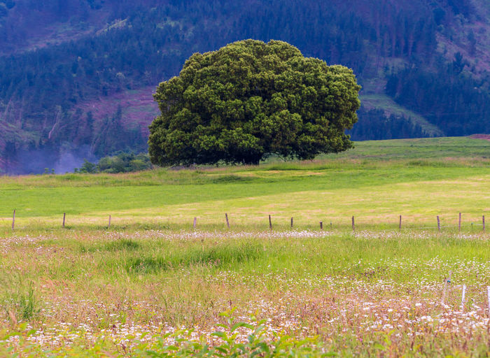 Scenic view of trees on field