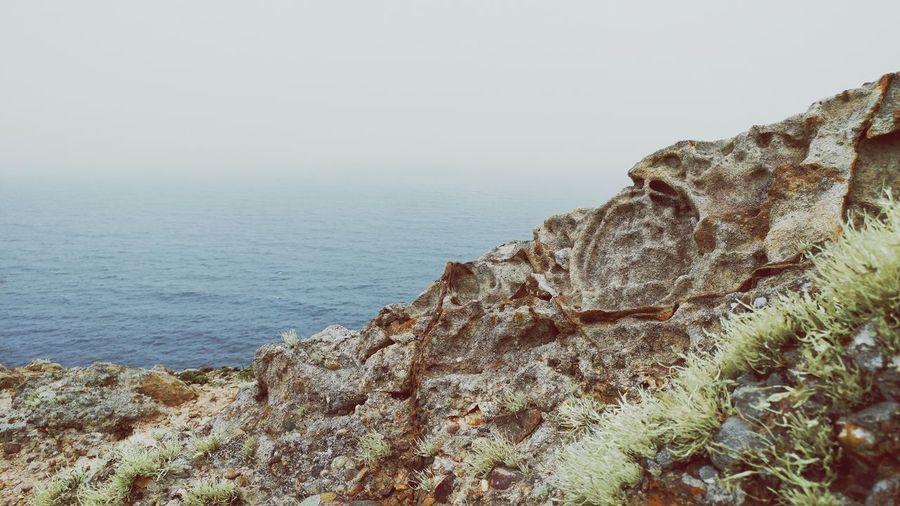 Furry moss grows on a rock by the ocean's edge. Moss On Stone Oceanside California Rocky Coastline Stones & Water Foggy Ocean Fog Blanket On The Ocean Point Reyes, California Alone By The Ocean California Foggy Landscape