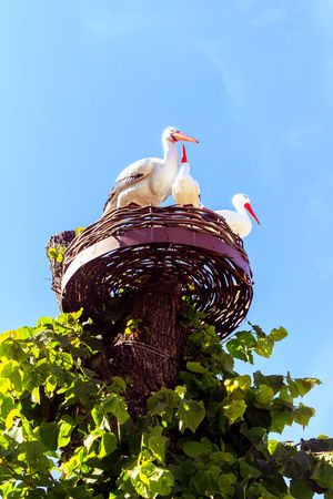 Stork Architecture Beautiful Blue City City Life Clear Sky Creativity Green Color Growth Leaf Low Angle View Nature Outdoors Petrozavodsk Russia Sculpture Statue красота небо Петрозаводск Природа Россия статуя