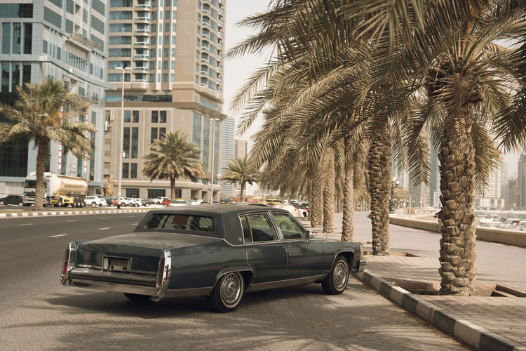 Cars on street by palm trees and buildings in city