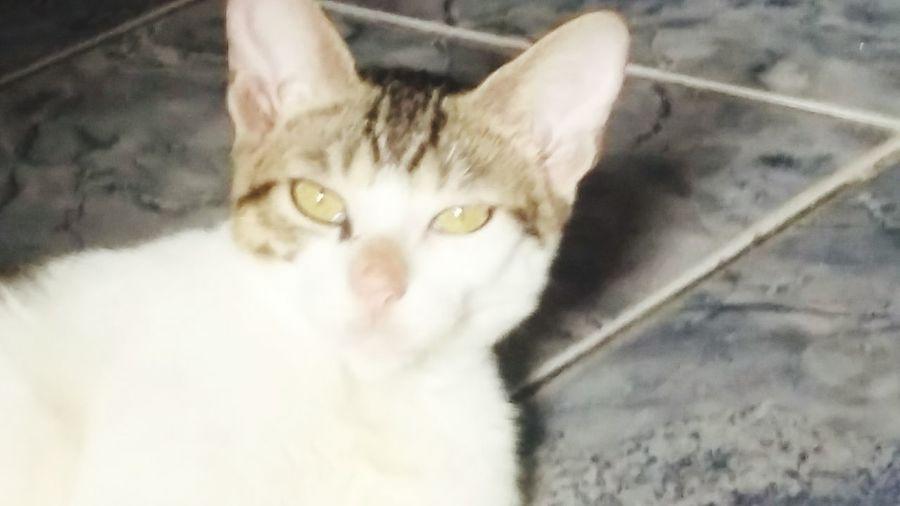 My cat ❤❤ I love