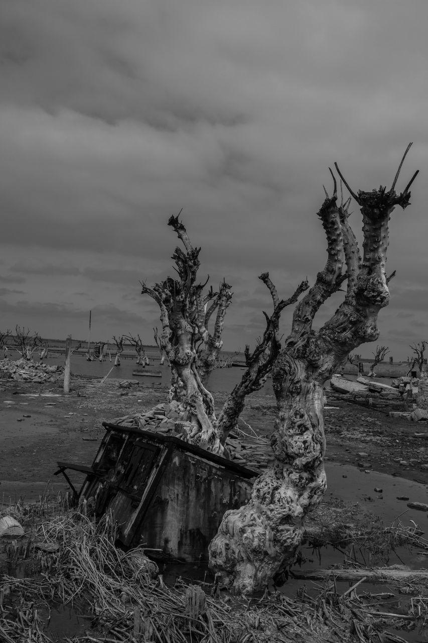 DAMAGED TREE ON SHORE AGAINST SKY