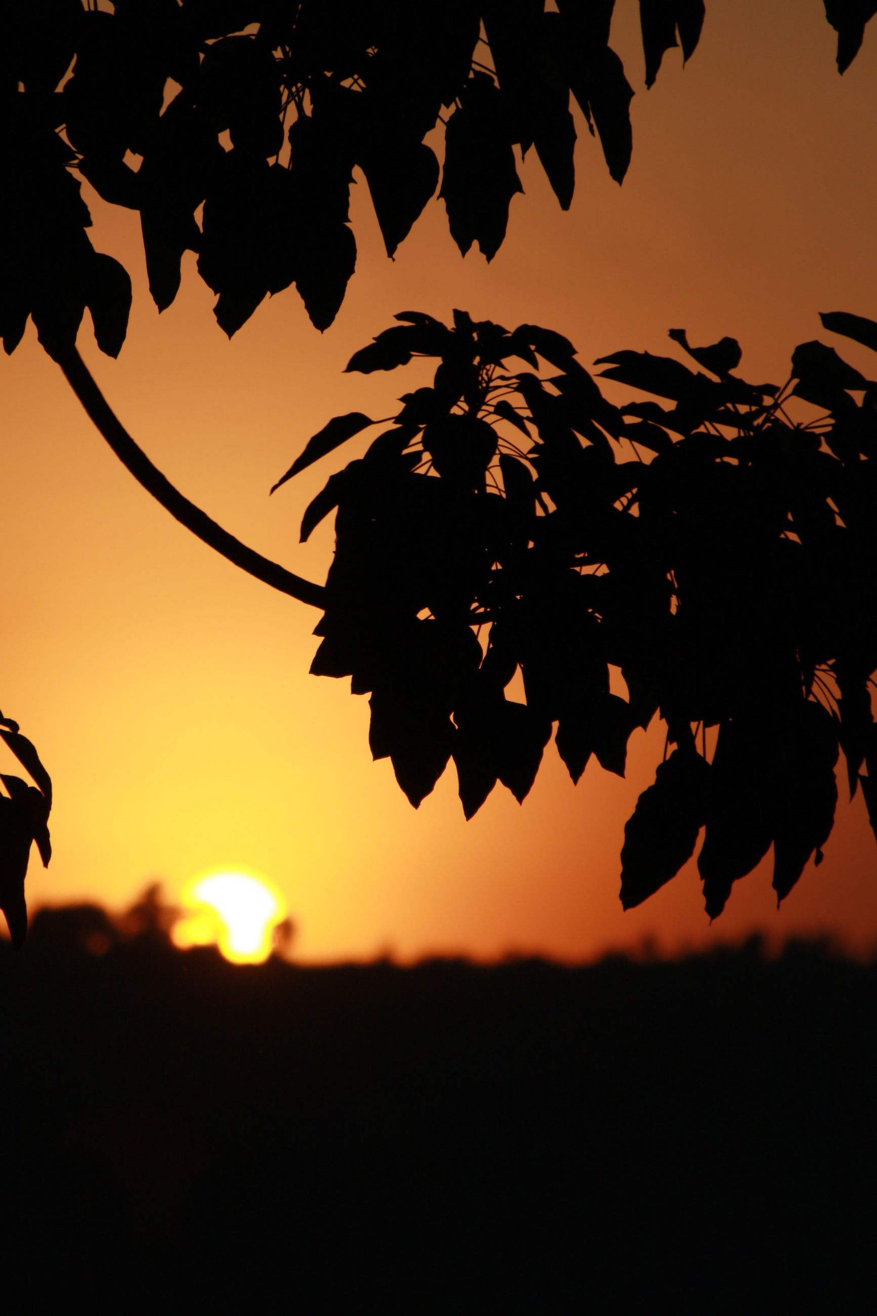 sunset, orange color, focus on foreground, nature, close-up, leaf, growth, beauty in nature, sun, sky, tranquility, scenics, plant, outdoors, no people, tranquil scene, outline, twig, idyllic, stem, selective focus, dark, landscape