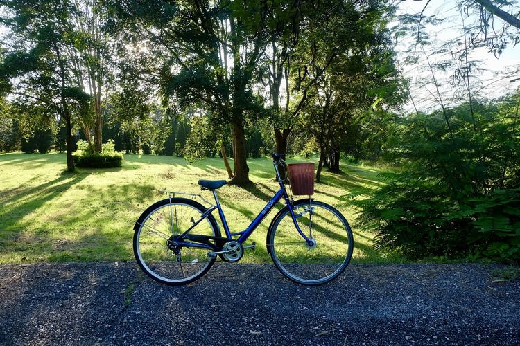 Plant Tree Transportation Bicycle Nature Green Color Land Vehicle Day Mode Of Transportation Growth Grass No People Land Sunlight Park Field Stationary Outdoors Tranquility Shadow
