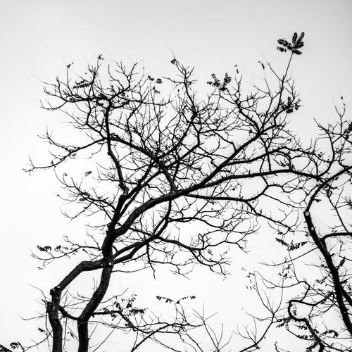 Branches Canvas