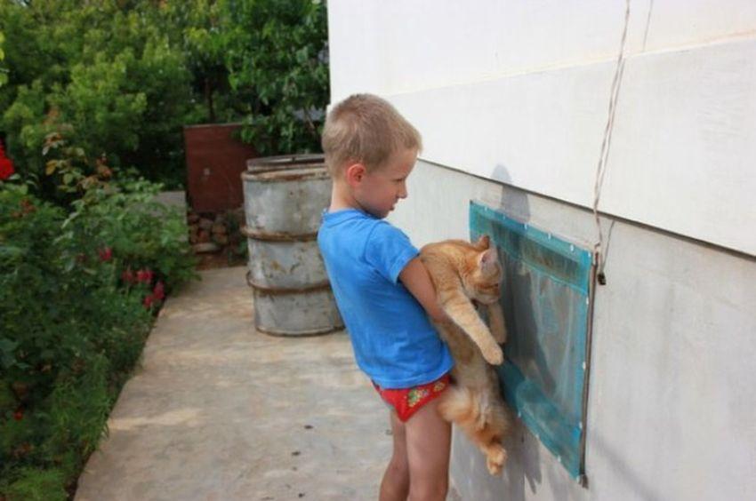 Друзья Cat friends Áfonya рыжий кот Афоня Afonsiko Cats Cat♡