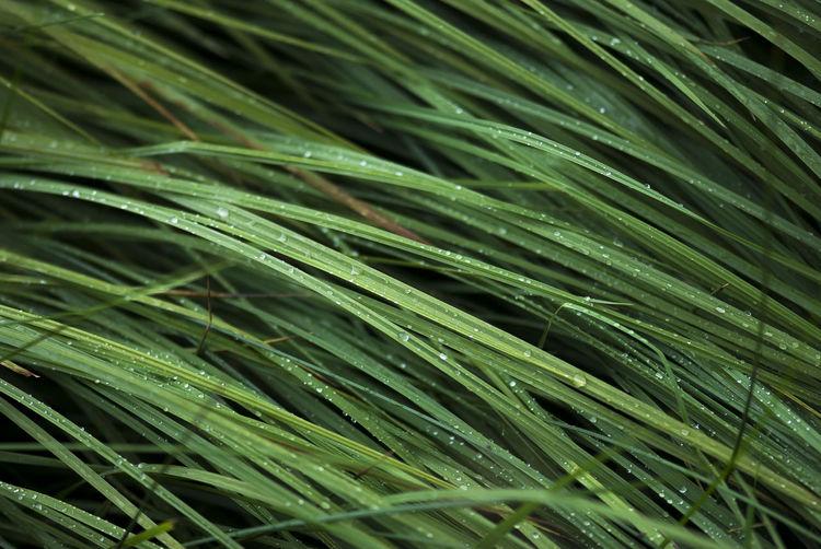 Full frame shot of fresh grass