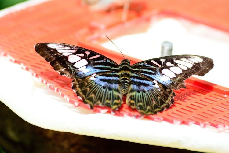Wildlife and forestry Animal Animal Body Part Animal Eye Animal Markings Animal Themes Animal Wildlife Animal Wing Animals In The Wild Beauty In Nature Butterfly Butterfly - Insect Close-up Day Flower Focus On Foreground Insect Invertebrate Nature No People One Animal Outdoors Zoology