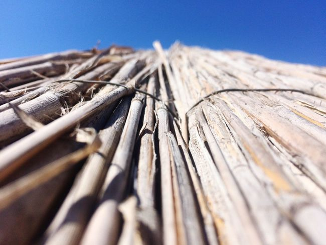 EyeEm Selects Wood - Material No People Day Textured  Outdoors Low Angle View Timber Blue Sunlight Bamboo - Material Close-up Clear Sky Nature Sky