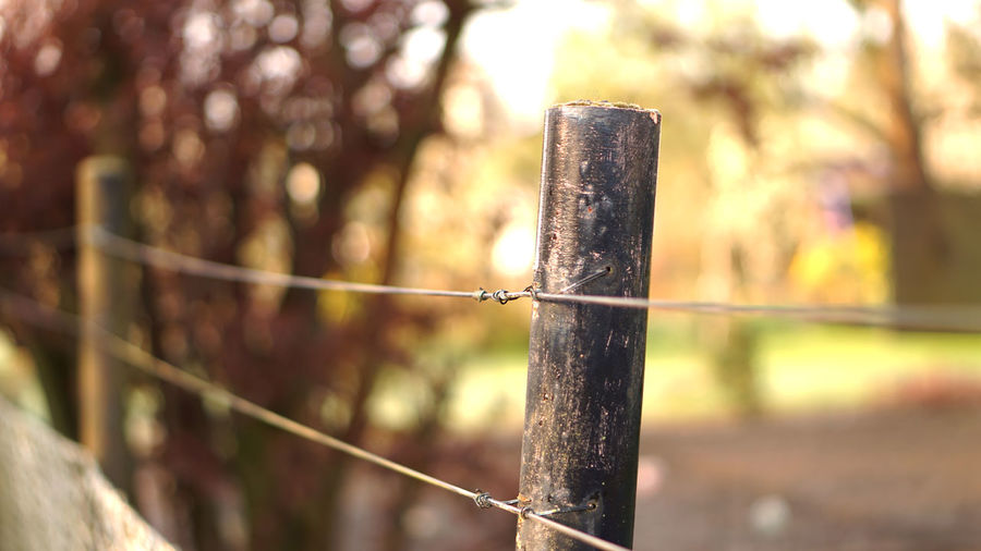 Close-up of rusty metal fence against blurred background