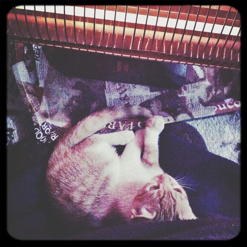 Popular Photos Baby Boy Cat♡ Relaxing