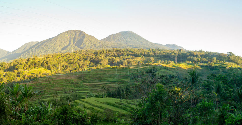 Jatiluwih Rice Terrace Agriculture Beauty In Nature Day Environment Farm Field Green Color Growth Land Landscape Mountain Mountain Range Nature No People Outdoors Plant Plantation Rolling Landscape Rural Scene Scenics - Nature Sky Tranquil Scene Tranquility Tree