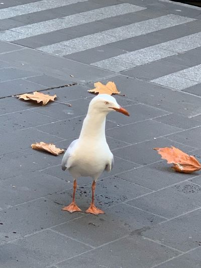 Bird in city