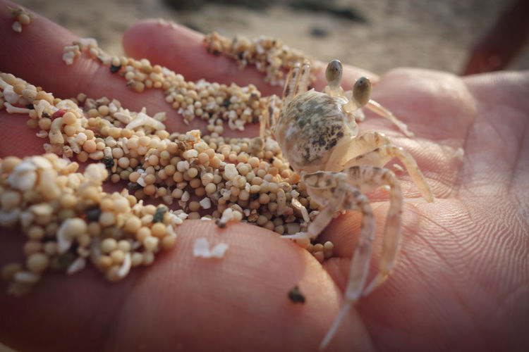 Crab Lombok-Indonesia Coral Sand Human Hand