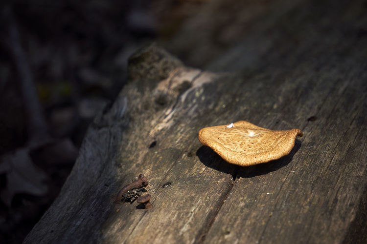 The light shines on a lovely mushroom, grown over the dead tree. Wood Nature Fungus Food Tree Day Mushroom Bark Outdoors Shape Simplicity Food And Drink Tree Trunk Close-up Textured  No People Wood Grain Selective Focus High Angle View Single Object Wood - Material Capture Tomorrow Springtime Decadence