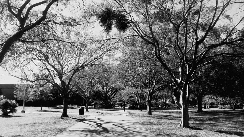 Ucf Orlando Beautiful Blackandwhite Life Photo Relaxing Taking Photos