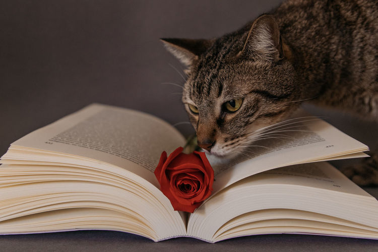 Close-up of cat on open book