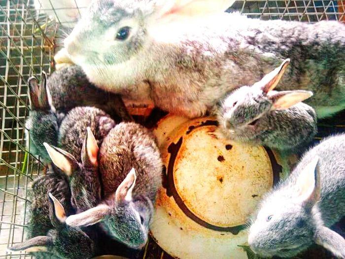 Rabbits 🐇 Feeding  ®™
