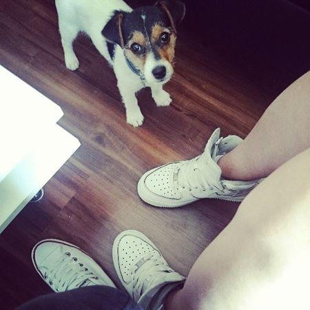 Jackrusselterrier Puppy Mylove Zara poland gdansk airforce converse polishgirls instafollow instagirls