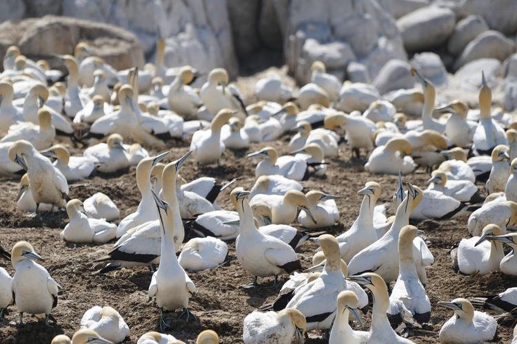 High angle view of seagulls