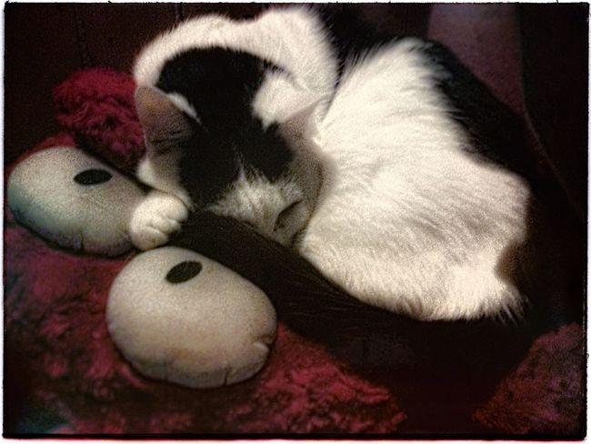 IPadography Animal Photography Cat Artistscats Ilovemycat Pets Filter Catnap Katze