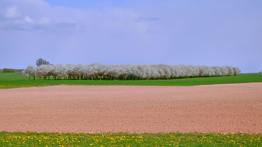 Orchards in Haspengouw / Hesbaye - Belgium - April 2019 Field Landscape Sky Tranquil Scene Environment Land Plant Tranquility Agriculture Nature Day Rural Scene Beauty In Nature No People Scenics - Nature Grass Farm Green Color Outdoors Tree Plantation Orchard Haspengouw Hesbaye