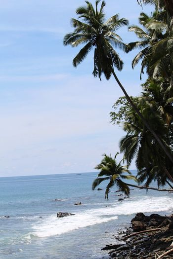 Island Tree Sea Water Tropical Climate Palm Tree Land Plant Scenics - Nature Travel Destinations Beach Nature Beauty In Nature Coconut Palm Tree Outdoors Holiday Tropical Tree Sky