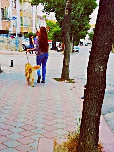 Dog Puppy Ankara Pets