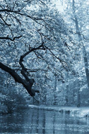 Something Blue Autumn🍁🍁🍁 Monochrome Tree
