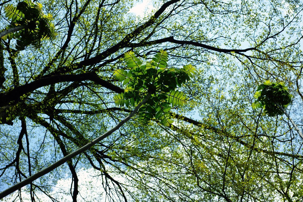 tree, nature, low angle view, growth, branch, forest, green color, beauty in nature, day, no people, outdoors, sky
